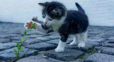 De ecologische pootafdruk van je huisdier