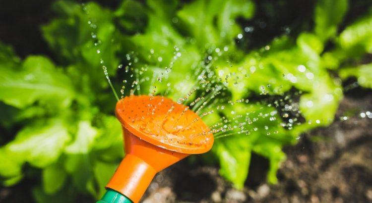 Tips om dit seizoen uw tuin zo efficiënt mogelijk water te geven